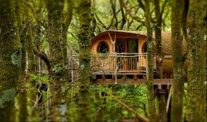 Unique of the Week – Living-Room Tree Houses