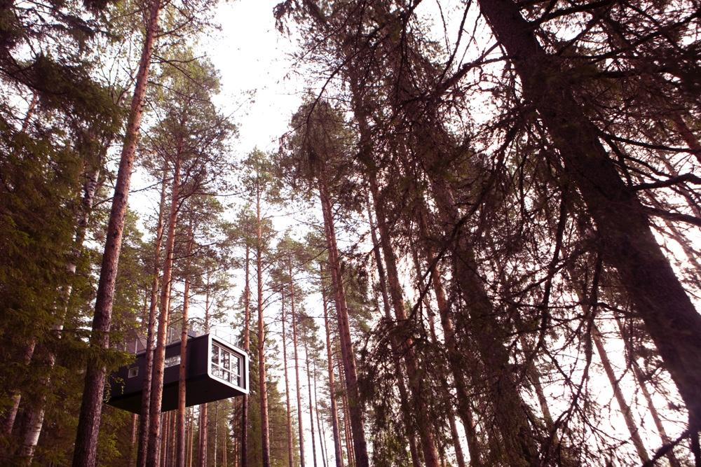 Treehotel Sweden The Cabin