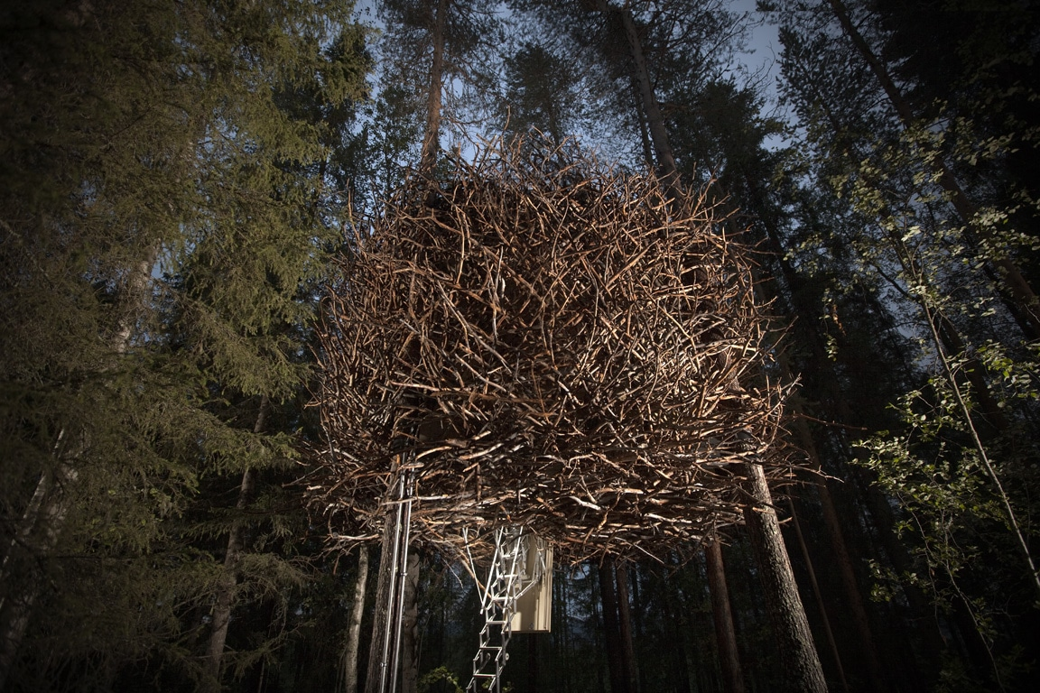the birds nest treehotel sweden