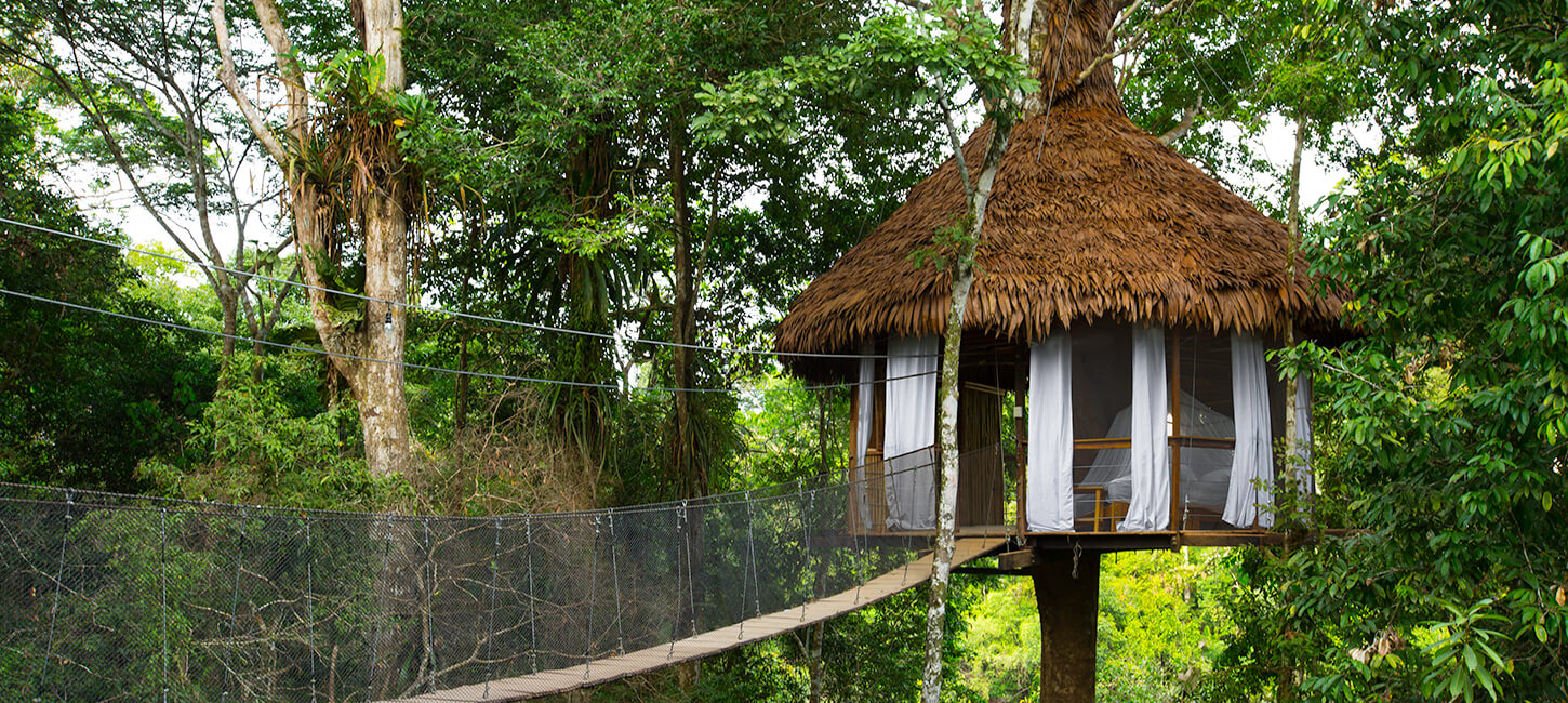 Tree House Lodge Peru Large