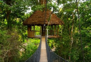 11 Amazing Tree Houses For Rent